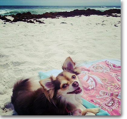 dog-friendly-orange-beach